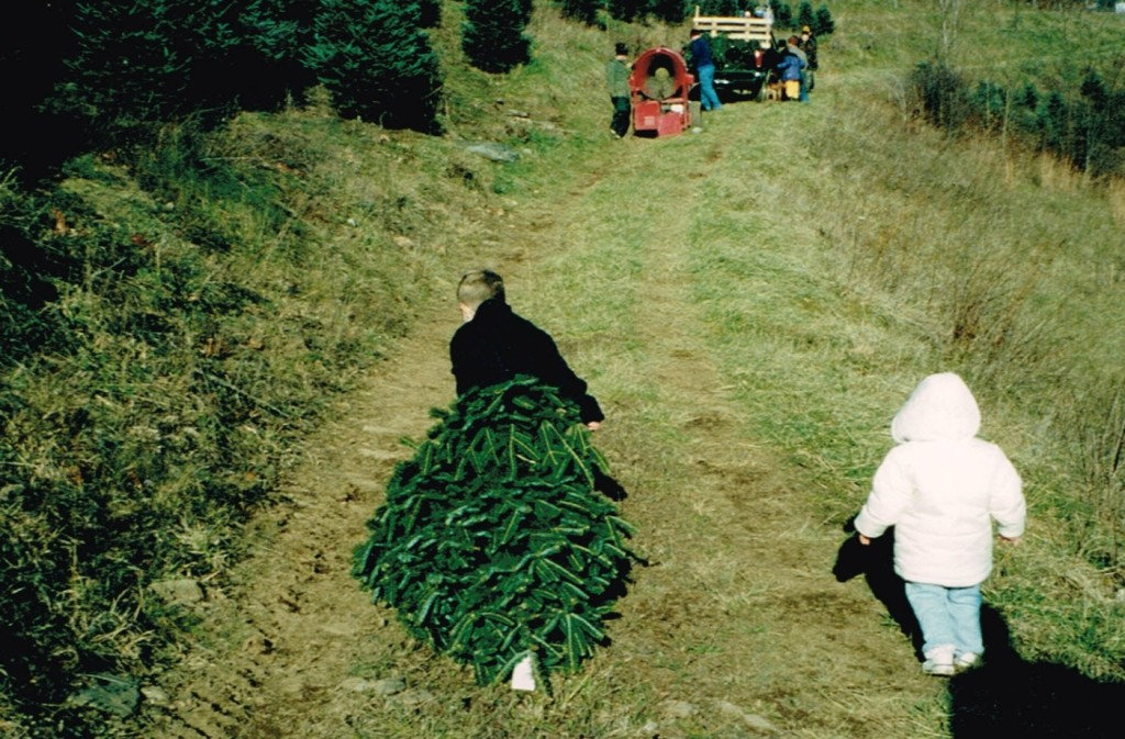 Getting The Tree